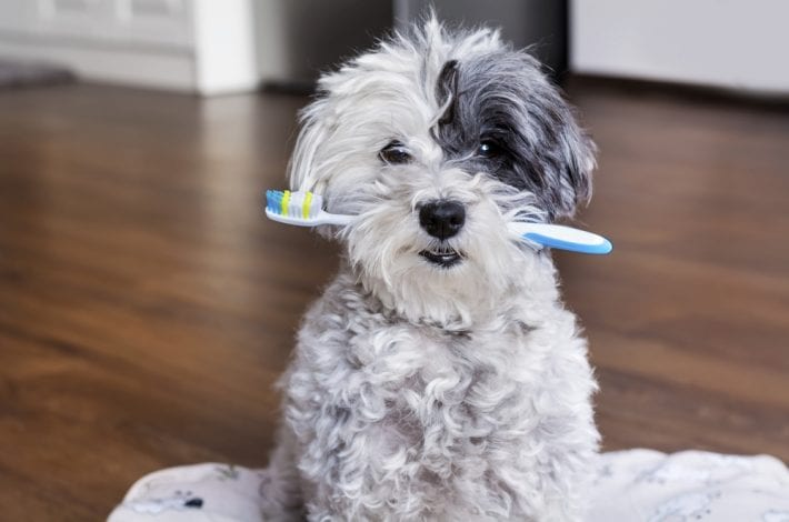 kids not brushing teeth - try these 11 fun games to get your child to brush their teeth