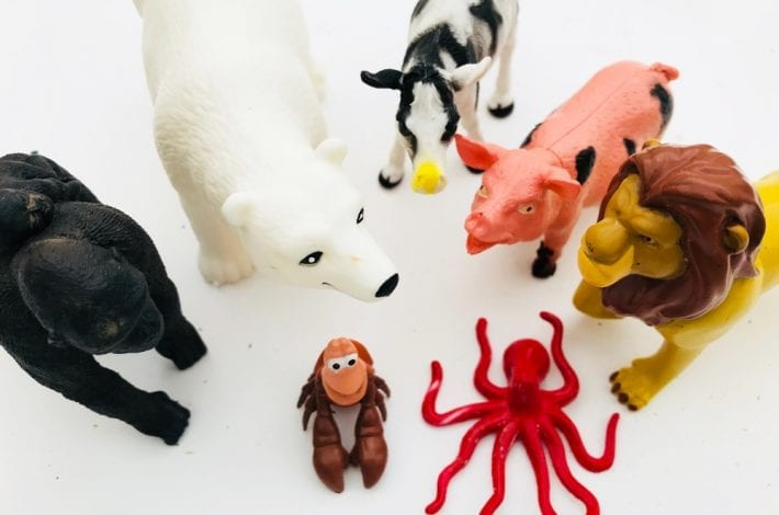 Animal habitat sensory trays for preschoolers- learn about animals and where they live