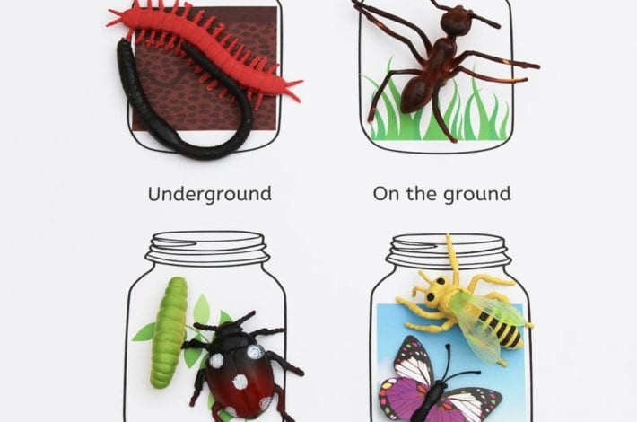 Where do minibeasts live - exploring micro-habitats with early years minibeasts activities with free printables