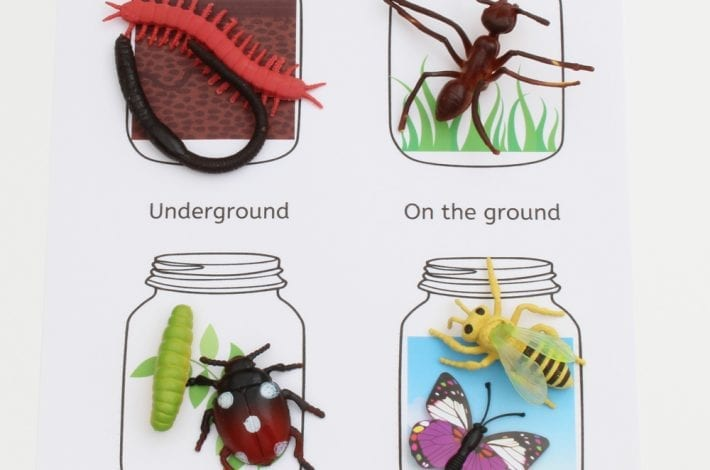 where do insects live? learning game for kids
