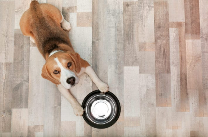 Ollie vs pet plate - ollie review - pet plate review - best fresh dog food delivery service
