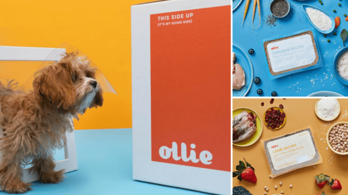 Ollie meals review - best fresh dog food