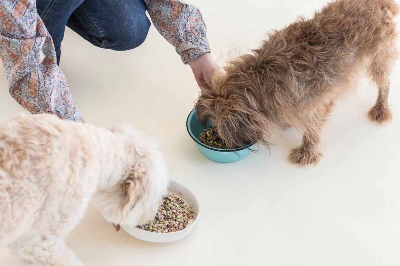 Spot and tango review - fresh dog food review