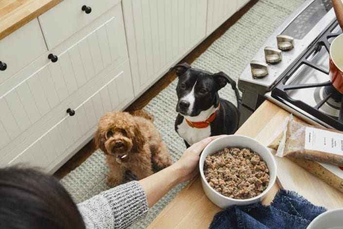 The Farmers dog review - best fresh dog food brand