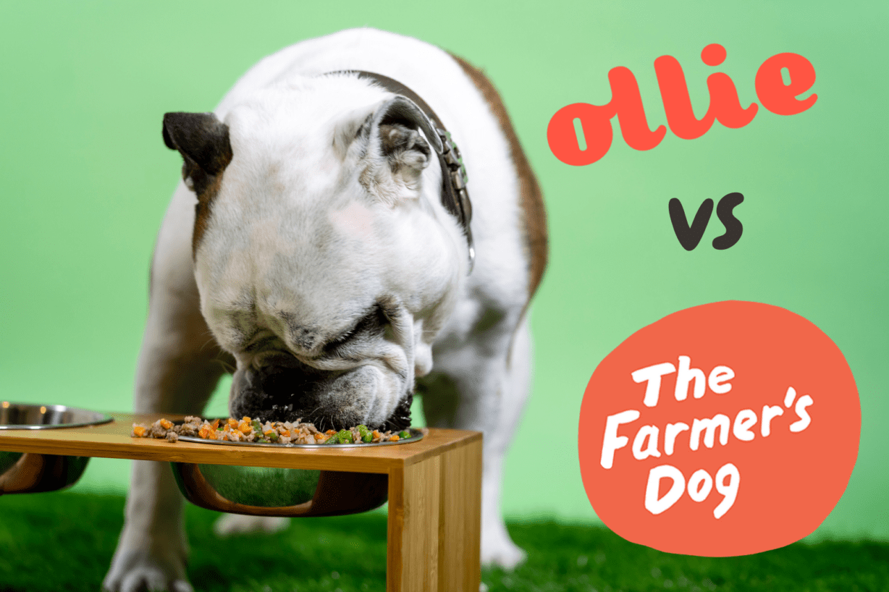 ollie vs the farmers dog - which is the best fresh dog food