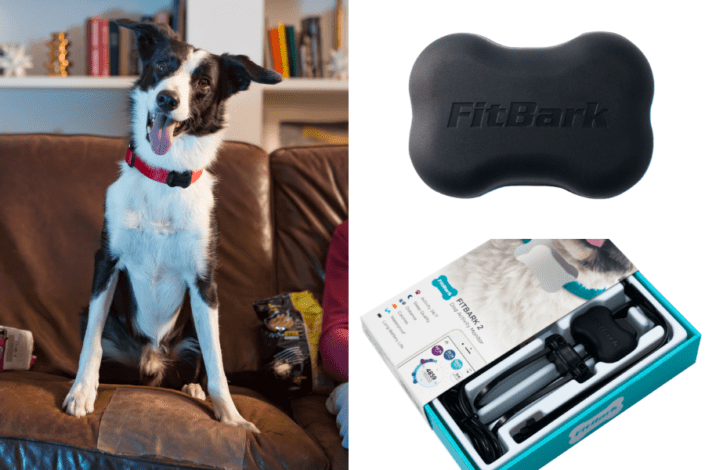 Fitbark review - Fitbark location tracker - Fitbark activity tracker- Fitbark review
