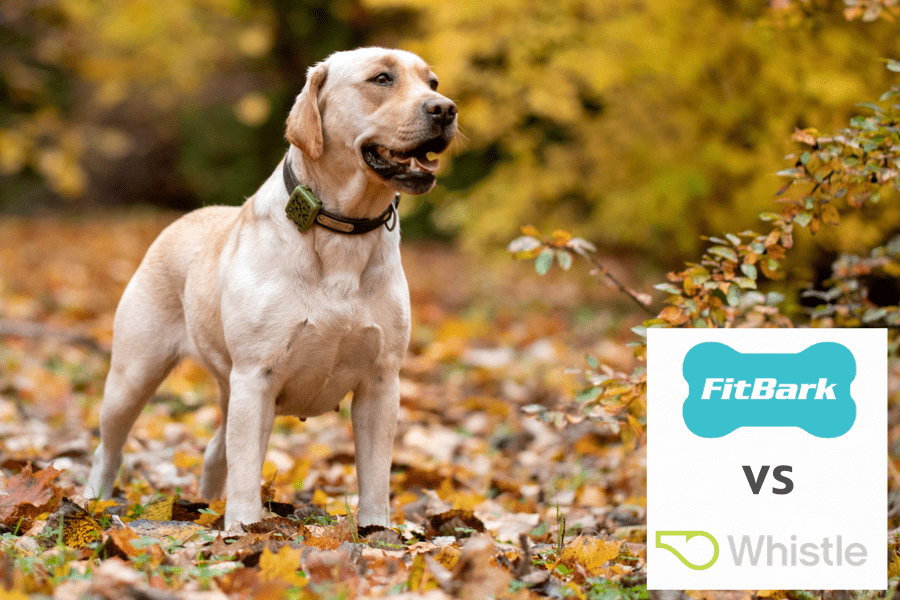 Fitbark vs whistle - best dog activity trackers - best dog location tracker - fitbit for dogs