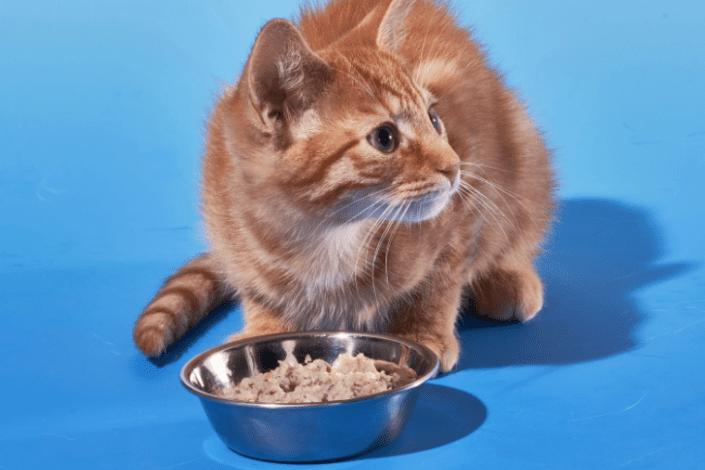Smalls cat food review - smalls fresh cat food review