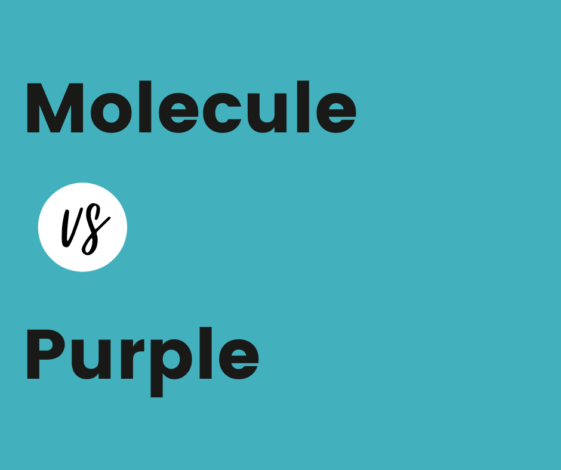 Molecule vs Purple comparison